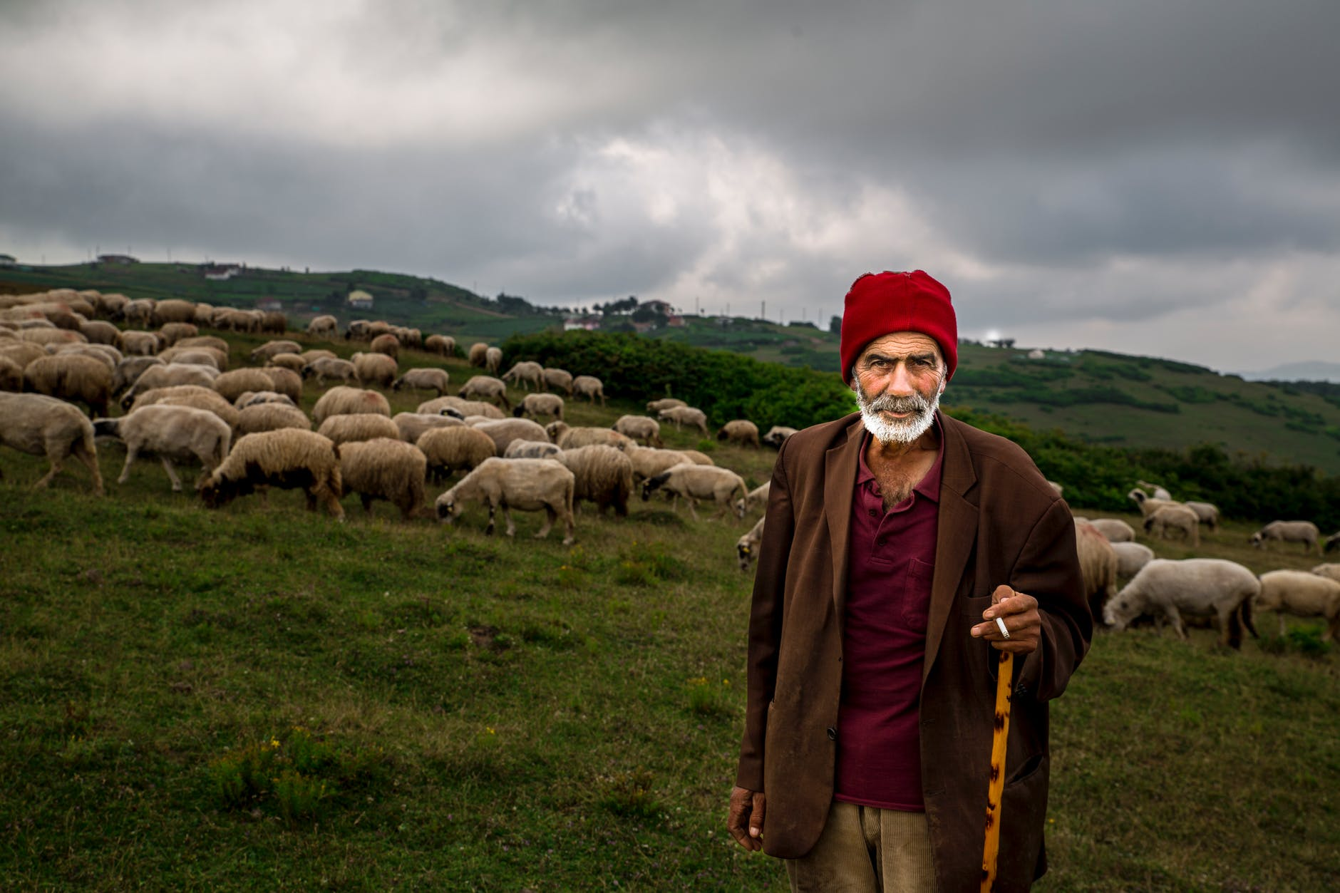 photo of old man with herd of sheep