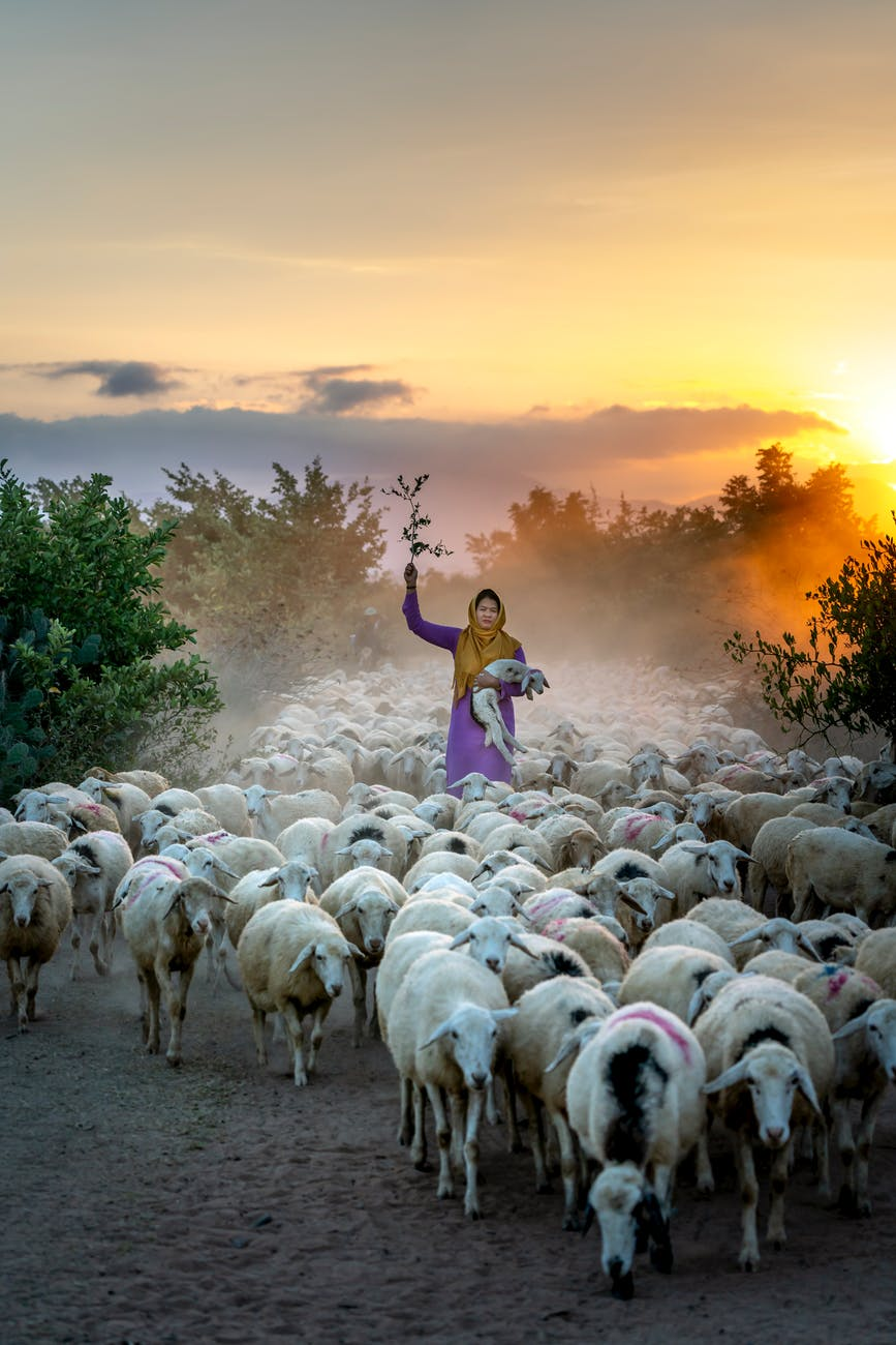 woman standing surrounded by herd of animals